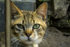 Eine nette kleine Katze, Liebeskatze, Abschluss oben Stockbild