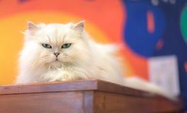 Eine nette weiße Katze ist das Spielen frech auf einem hölzernen Schreibtisch stockfoto