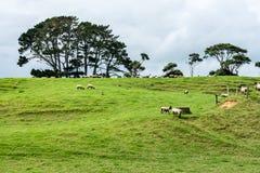 Eine Neuseeland-Schaf-Station lizenzfreies stockfoto