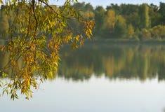 Eine Niederlassung über dem Wasser Herbst lizenzfreies stockbild