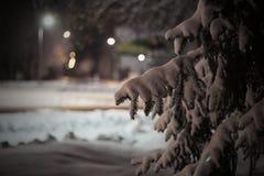 Eine Niederlassung der Fichte unter Schnee nachts Stockfotos