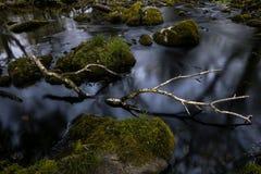 Eine Niederlassung der silbernen Birke in einem Fluss Stockfotos