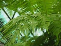 Eine Niederlassung des tropischen Baums lizenzfreies stockfoto