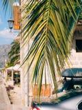 Eine Niederlassung einer Palmenahaufnahme Stockbild