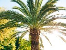 Eine Niederlassung einer Palmenahaufnahme Lizenzfreie Stockbilder