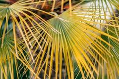 Eine Niederlassung einer Palmenahaufnahme Lizenzfreies Stockfoto