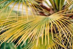 Eine Niederlassung einer Palmenahaufnahme Stockfotos
