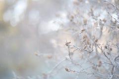 Eine Niederlassung mit Pastellhintergrund der kleinen Kegel mit bokeh lizenzfreie stockfotografie