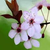 Eine Niederlassung von Kirschblüten auf einem hellen farbigen Hintergrund lizenzfreie abbildung