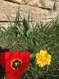 Eine Note des süßen Frühlinges Stockfotografie