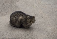 Eine obdachlose braune Katze beim Sitzen auf der Straße lizenzfreies stockfoto