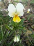 Eine Oktober-Blume Lizenzfreies Stockfoto