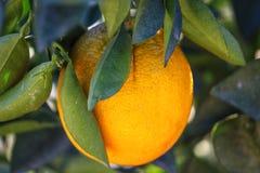 Eine Orange lizenzfreies stockbild