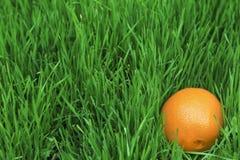 Eine Orange im Gras Stockbild