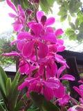 Eine Orchidee lizenzfreie stockbilder