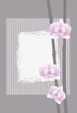 Eine Orchidee auf grauem Hintergrund. Lizenzfreies Stockfoto