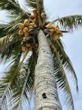 Eine Palme über den sonnigen Stränden von Miami, Florida, USA Lizenzfreie Stockbilder