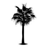 Eine Palme Lizenzfreies Stockbild