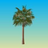 Eine Palme Stockfotografie