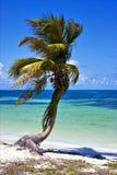 Eine Palme in der Sian-kaan Lagune Mexiko Lizenzfreies Stockbild