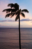 Eine Palme gegen Sonnenunterganghimmel stockfoto