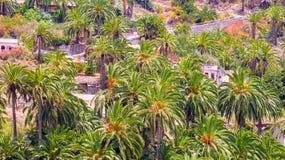 Eine Palme-punktierte Regelung in stockbild