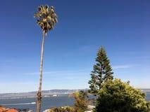 Eine Palme und Kiefer erreichen für den Himmel, zurückgezogen durch die Bucht stockfotos