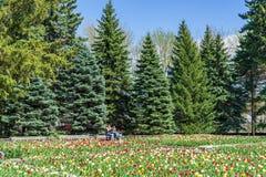 Eine Pause zwischen Tulpen an botanischem Garten Montreals Lizenzfreie Stockfotos