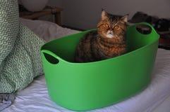 Eine persische Katze innerhalb eines grünen Korbes stockfotos