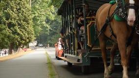 Eine Pferdekutsche in Stanley Park stock video footage