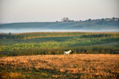 Eine Pferdemorgens Sonne mit einem Nebel lizenzfreie stockfotos