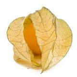 Eine Physalisfrucht Stockfoto