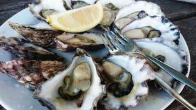 Eine Platte von Austern lizenzfreie stockbilder