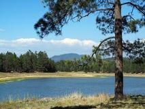 Eine Ponderosa-Kiefer, die einen See übersieht Stockfotografie