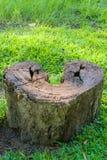 Eine Porträtaufnahme eines Herz-förmigen Verrottungsbaumstumpfs, gefunden in einem grasartig-grünen Garten stockfoto
