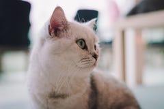 Eine Porträtmalerei einer Katze im Raum füllte mit Weichzeichnung des weichen Lichtes und des Gebrauches Der Hauptfokuspunkt ist  Lizenzfreie Stockbilder