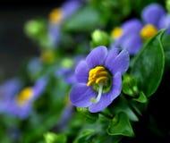 Eine purpurrote Blume Lizenzfreie Stockfotografie