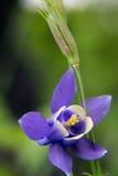 Eine purpurrote Blume Stockfoto