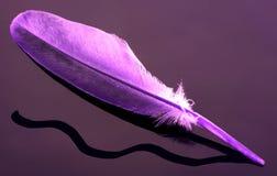 Eine purpurrote Feder Stockfotografie