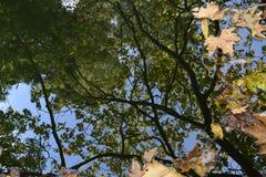 Eine Reflexion des Himmels und der Versuche Stockbilder