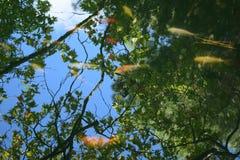 Eine Reflexion des Himmels und der Versuche Stockbild