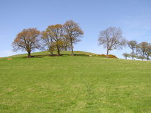 Eine Reihe der Bäume oben auf einen grasartigen Abhang Stockbild