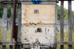 Eine Reihe der Biene fängt auf einem Gebiet ein Der Imker auf dem Gebiet von Blumen Bienenstöcke in einem Bienenhaus mit den Bien Stockfotos