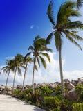 Eine Reihe der Palmen an der Straße. lizenzfreies stockbild
