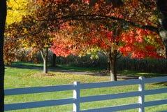 Eine Reihe der Regenbogenherbstbäume und des Zauns Lizenzfreies Stockbild