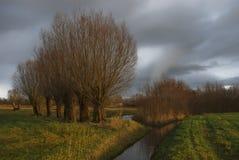 Eine Reihe der Weiden im Winter Stockfoto
