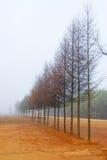 Eine Reihe des Baums Stockfotos