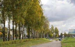 Eine Reihe von Birken Lizenzfreie Stockbilder