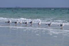 Eine Reihe von den Seemöwen, die auf dem Ufer des Meeres sitzen Stockfoto