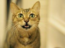 Eine reizende Katze Stockbilder